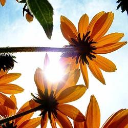 太陽の下でも元気!